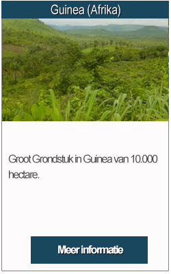 Guinea grondtuk
